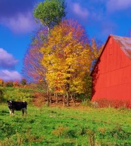 Farm and foliage, Stowe, VT